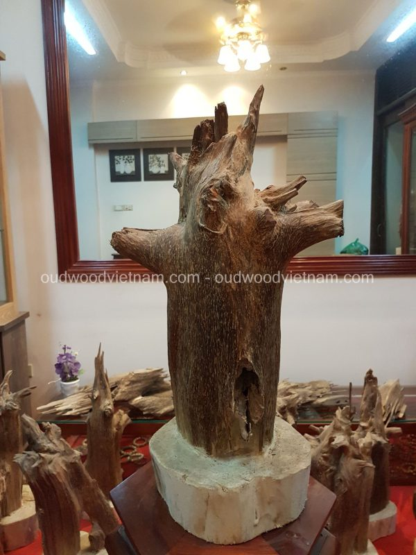 Rare Fragrance Agarwood Aloeswood Handy Sculpture Art Colletion Fengshui 6
