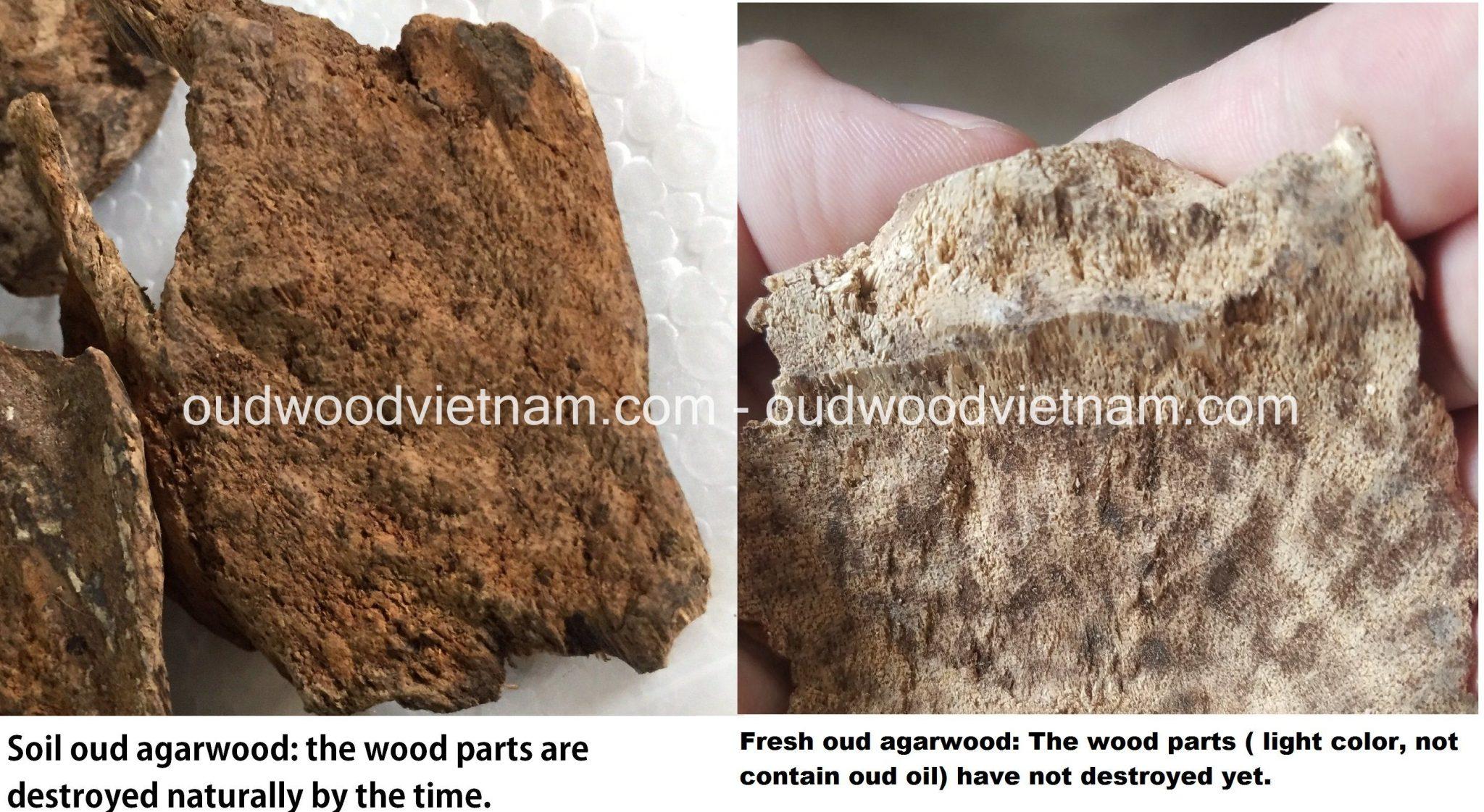 Soil oud agarwood vs fresh oud agarwood
